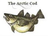 Artic-Cod-Nordic-Naturals