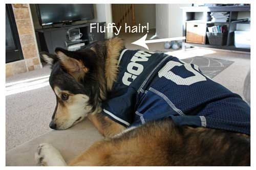 watch b91a9 4782c Dog Football Jerseys at Pet Super Store - With Our Best ...