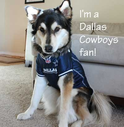 Dog-in-Dallas-jersey