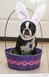 Happy Easter From an Unusual Looking Bunny