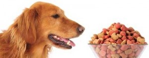 {Thoughts} Feeding Pets Premium Food