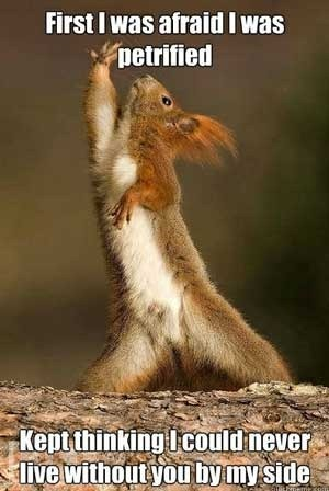 Squirrel Dance… Friday Funny - With Our Best - Denver