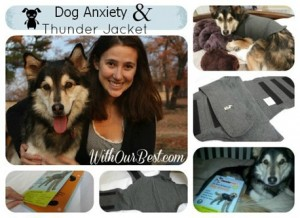 How To Reduce Stress & Anxiety in Dogs