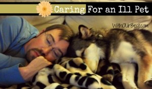 Caring for an Ill Pet