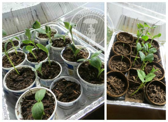 My gro project indoor mini greenhouses with our best for How to make a small indoor greenhouse