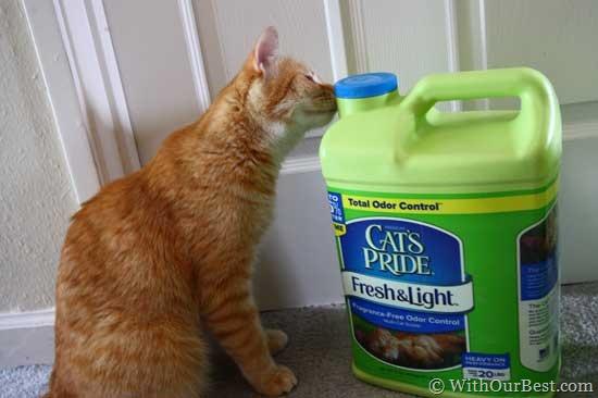Cat's Pride #FreshandLight Cat Litter Review