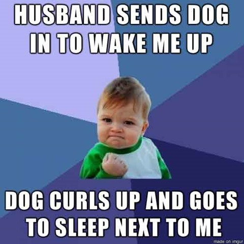 Naps with the Dog #FridayFunny