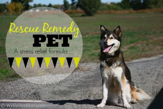 Dog Calming Medicine: RESCUE Remedy Pet {+Giveaway}