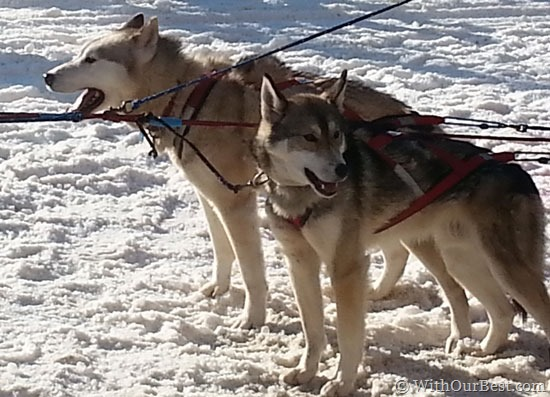 Travel-Tips-for-Iditarod
