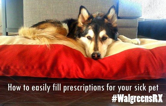 My Dog Got Dog Lice! Taking Care of Your Sick Pet #Shop #WalgreensRX
