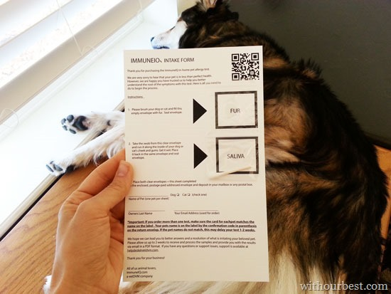 How to Test For #petallergies, At-Home Pet Allergy Test