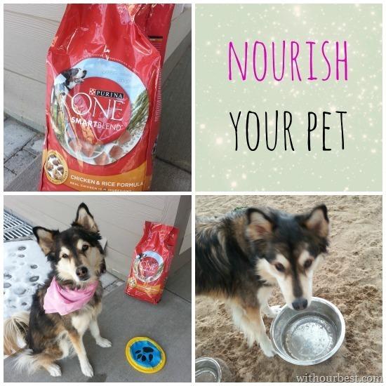 purinaone smartblend dog food