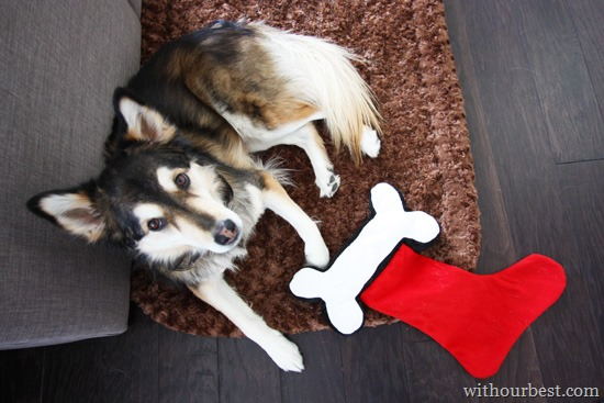 Pet Christmas: Doggie Gifts