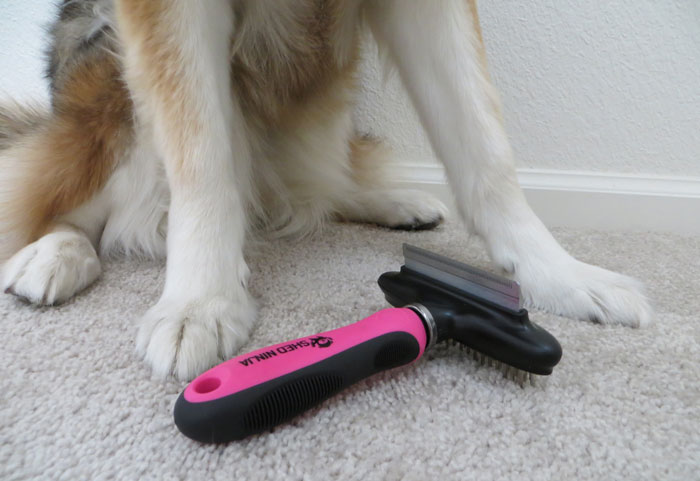 Guide-to-brushing-dog-with-
