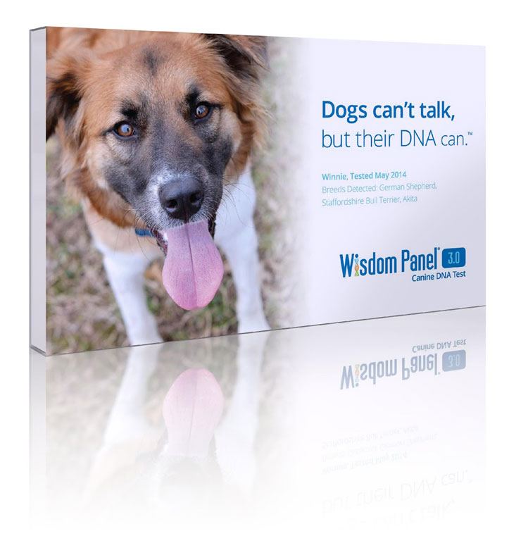 Dog-DNA-Testing