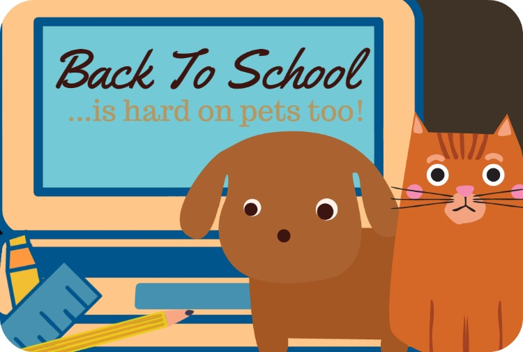 Back To School Can Be Hard On Pets Too