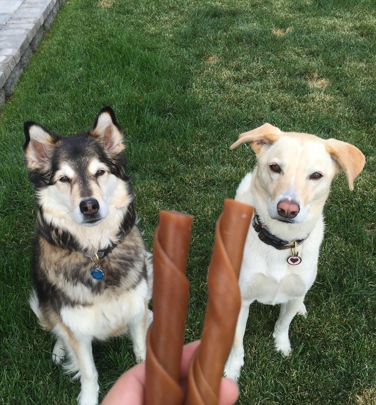 two-dogs-two-treats