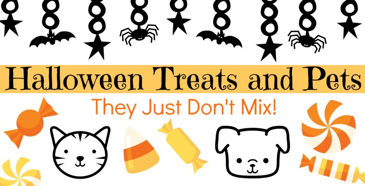 Treating pets on Halloween – tips from an expert