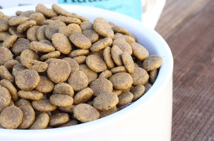 dog-food-high-protein