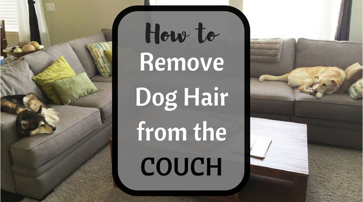 How to Remove Pet Hair from a Fabric Couch