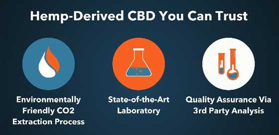 CBD, Endocannabinoid System, and More (PlusCBD Oil Review)