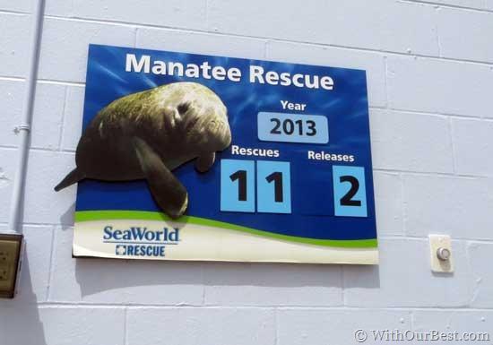 manatee-rescue-seaworld-orl