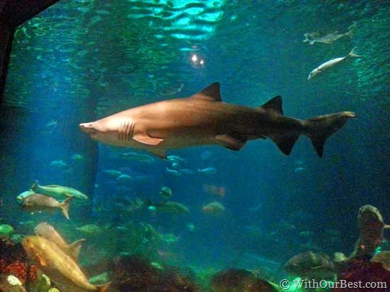 sharks-at-the-restaurant-in