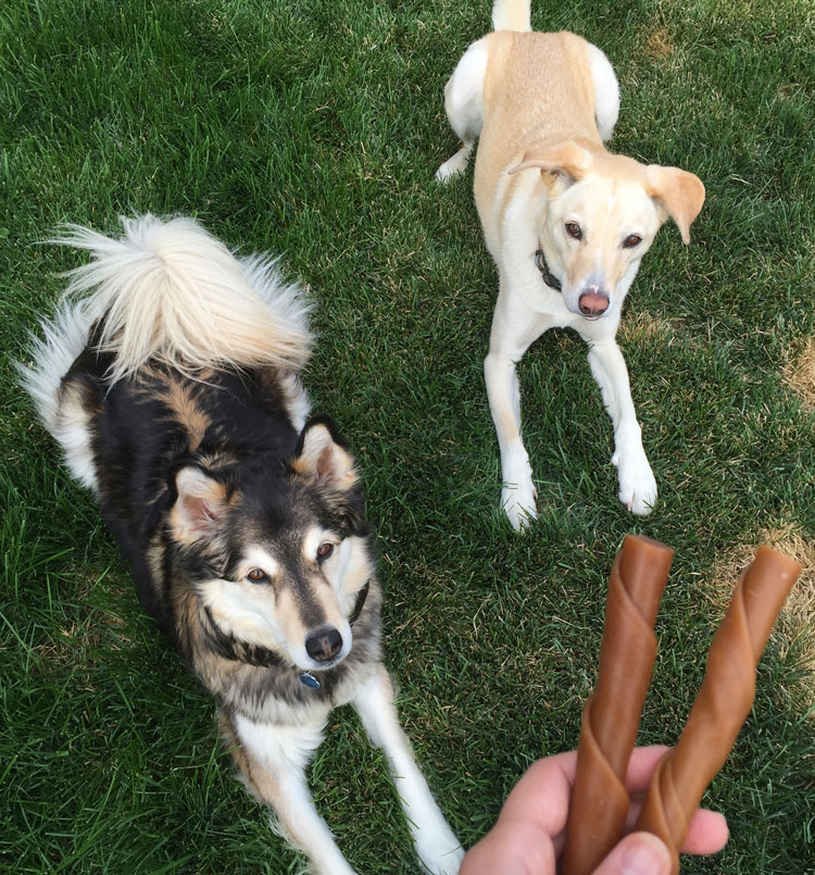 How Can I Strengthen My Dogs Bones