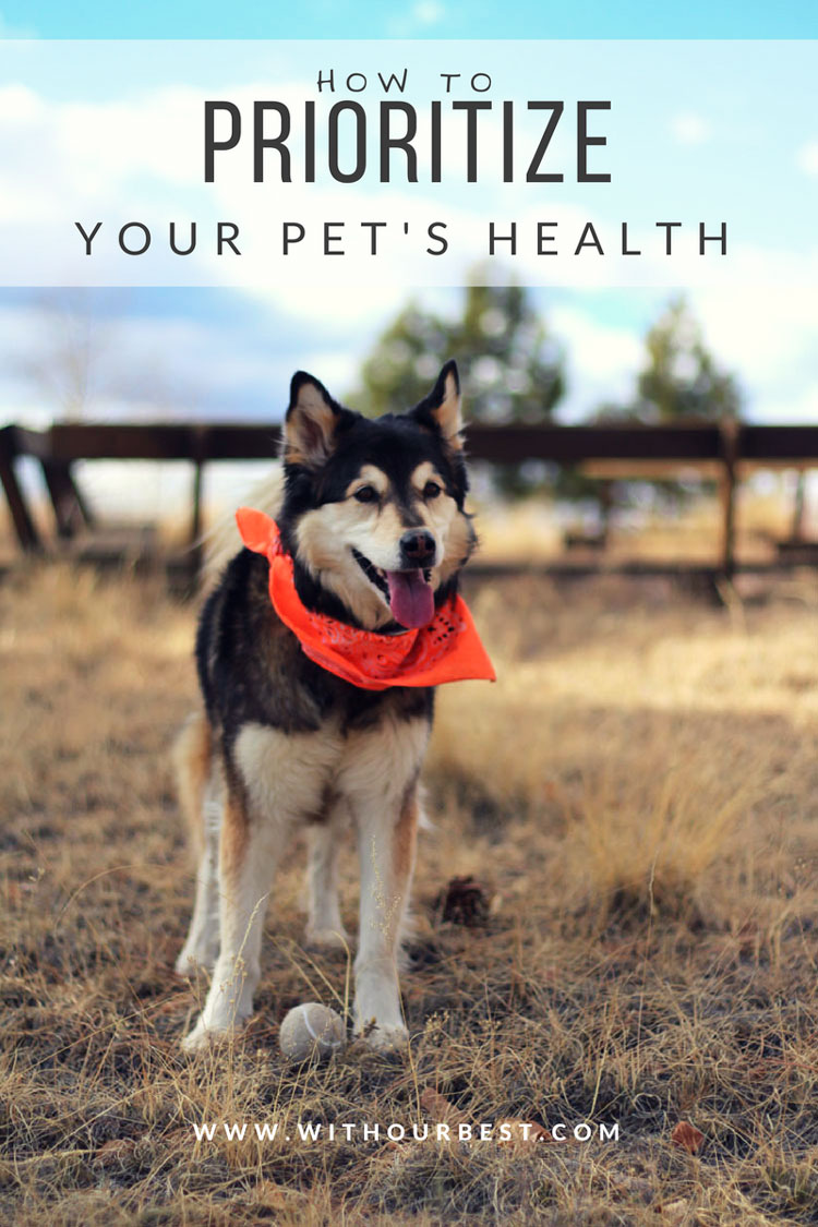 Making Your Pet's Health a Priority