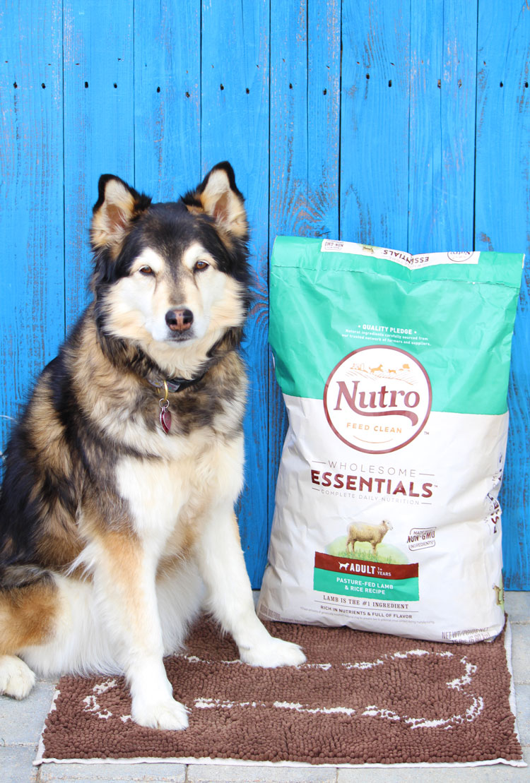 Have You Checked Your Dog Food Ingredients Lately?